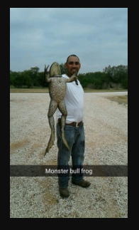 giant bullfrog caught